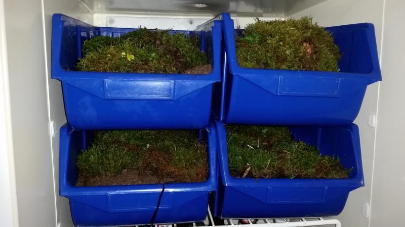 Mini Kühlschrank Für Schildkröten : Schildkröten kühlschrank zur Überwinterung winterstarre ganz einfach