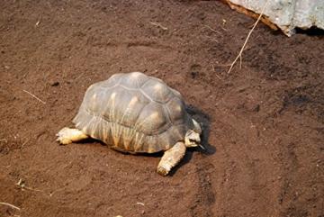 Floragard Schildkrötensubstrat 70 L • Schildkrötenerde • auch zur Eiablage,Winterstarre und Hibernation von Landschildkröten • 100% natürliches und düngerfreies Einstreu • für anspruchsvolle Reptilienarten - 2