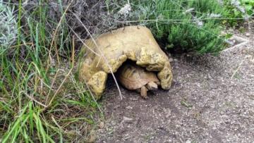 Schildkrötenhöhle