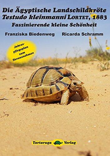 Die Ägyptische Landschildkröte Testudo kleinmanni Lortet, 1883: Faszinierende kleine Schönheit - 1
